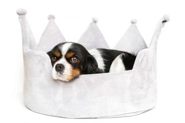 dog owner pet insurance yeti