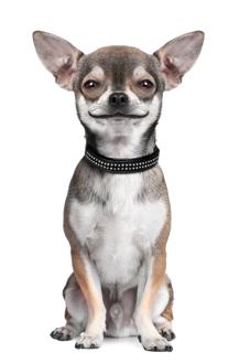 pet insurer dog yeti