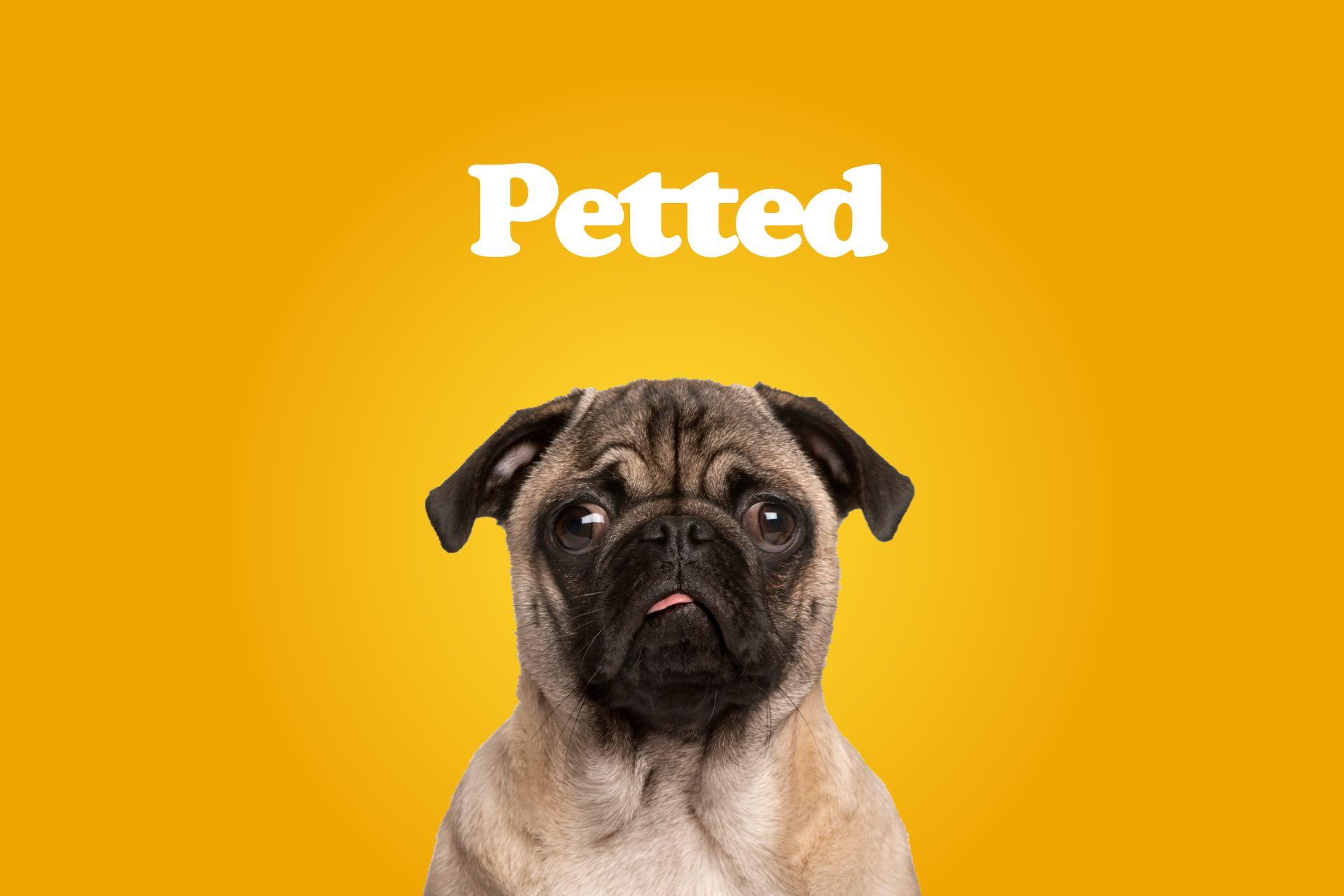 petted-portofolio-yeti-client